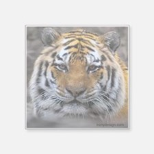 "Siberian Tiger Photograph Square Sticker 3"" x 3"""
