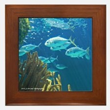 Coral and Fish Framed Tile