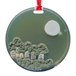 Moonscape Round Ornament