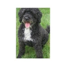 Portuguese Waterdog Rectangle Magnet