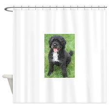 Portuguese Waterdog Shower Curtain