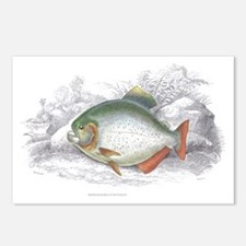 Piranha Fish Postcards (Package of 8)