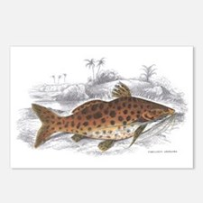 Catfish Fish Postcards (Package of 8)