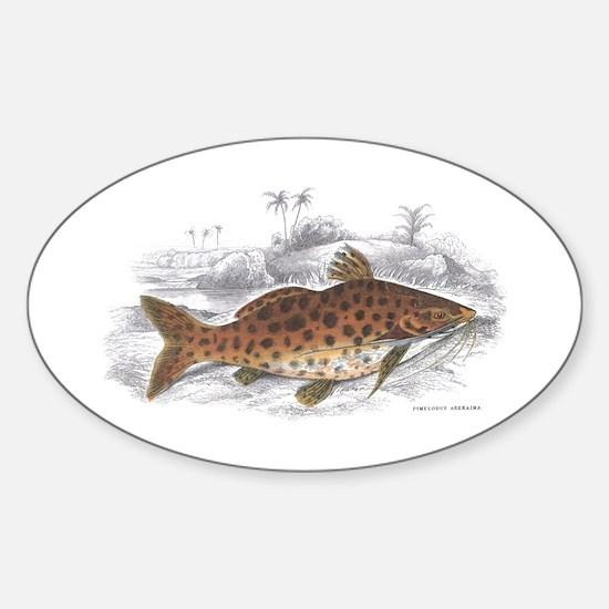 Catfish Fish Oval Decal
