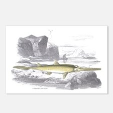Swordfish Fish Postcards (Package of 8)