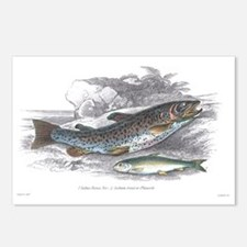 Trout Fish Postcards (Package of 8)