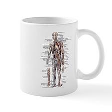 Anatomy of the Human Body Small Mug
