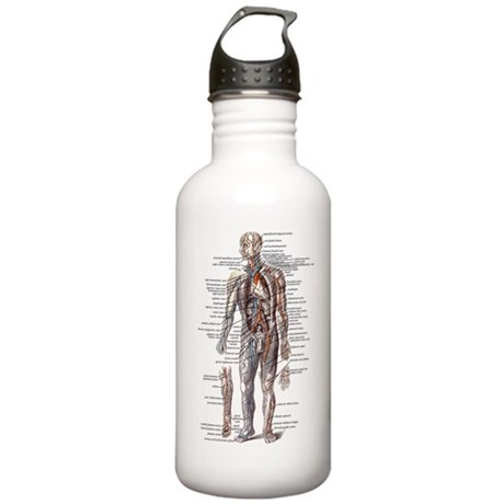 Anatomy of the Human Body Stainless Water Bottle 1