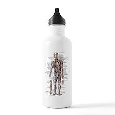 Anatomy of the Human Body Water Bottle