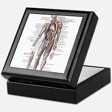 Anatomy of the Human Body Keepsake Box