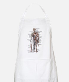 Anatomy of the Human Body Apron