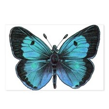 Ulysses Butterfly Postcards (Package of 8)