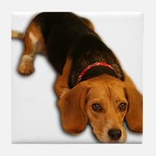 Beagle 3 Tile Coaster