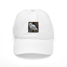Cute Cute owl Baseball Cap
