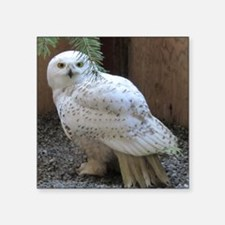 "Cute White owl Square Sticker 3"" x 3"""