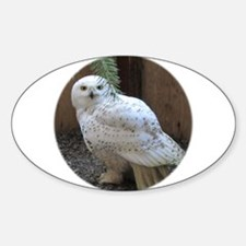 Unique Snowy owl Sticker (Oval)