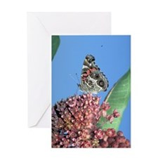 American Painted Lady on Milkweed Greeting Card