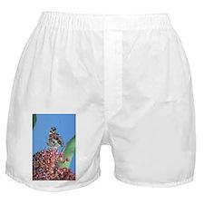 American Painted Lady on Milkweed Boxer Shorts