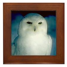 Snowy Owl Framed Tile