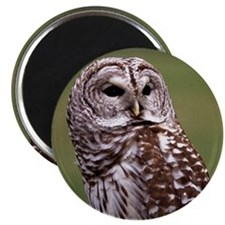 Owl (brown and white) Magnet
