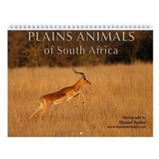 S. African Plains Animals Wall Calendar