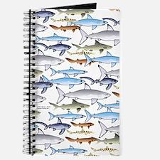 School of Sharks 1 Journal