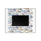 Shark Picture Frames
