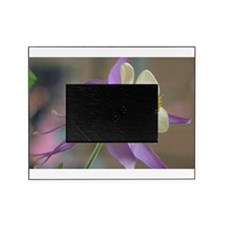 Purple and White Columbine Picture Frame