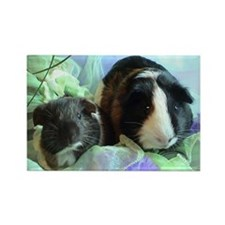 cavy Rectangle Magnet
