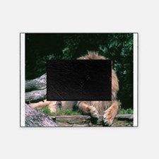 Lazy Lion Picture Frame