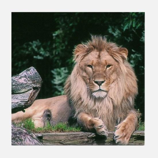 Lazy Lion Tile Coaster