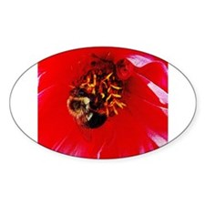 Bee Close Up on Red Dahlia Oval Decal