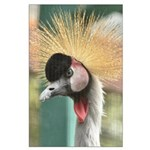 crowned crane.png Large Poster