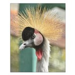 crowned crane.png Small Poster