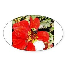 Bee on Red and White Dahlia Oval Decal