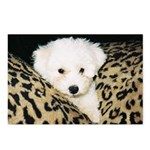 BICHON PUPPY FACE POSTCARDS (Package of 8)