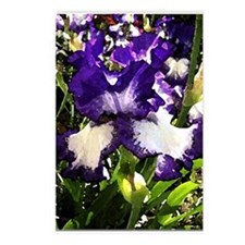 bearded irises watercolor Postcards (Package of 8)