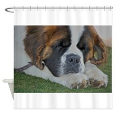 St. Bernard Shower Curtain