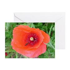 Poppy 2 Greeting Cards (Pk of 10)