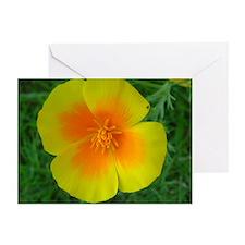 California Poppy Greeting Cards (Pk of 10)