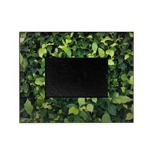 Green Ivy Picture Frame