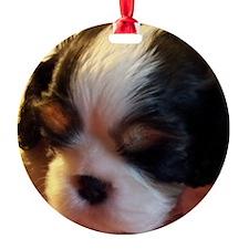 Tricolor Cavalier CKCS Puppy Ornament