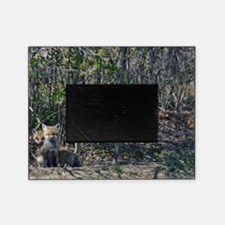 Red Fox kits Picture Frame