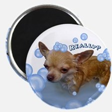 Really? Chihuahua Magnet