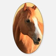 Horse portrait Decal