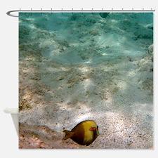 Snorkel Maui (Shower Curtain)