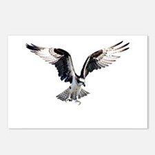 Hunting osprey Postcards (Package of 8)
