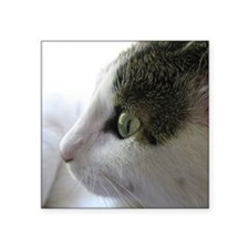 Green Eyed White Tabby Cat in Profile Square Stick