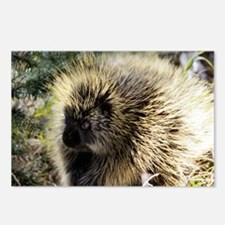 Prickly Subject Postcards (Package of 8)