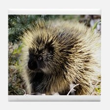 Prickly Subject Tile Coaster